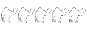 0 Camels