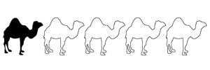 1 Camel