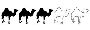 3 Camels