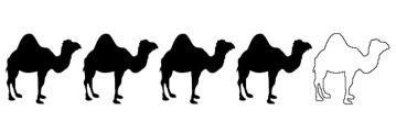 4 Camels
