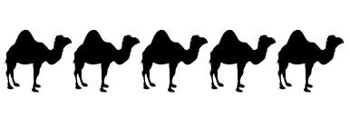 5 Camels